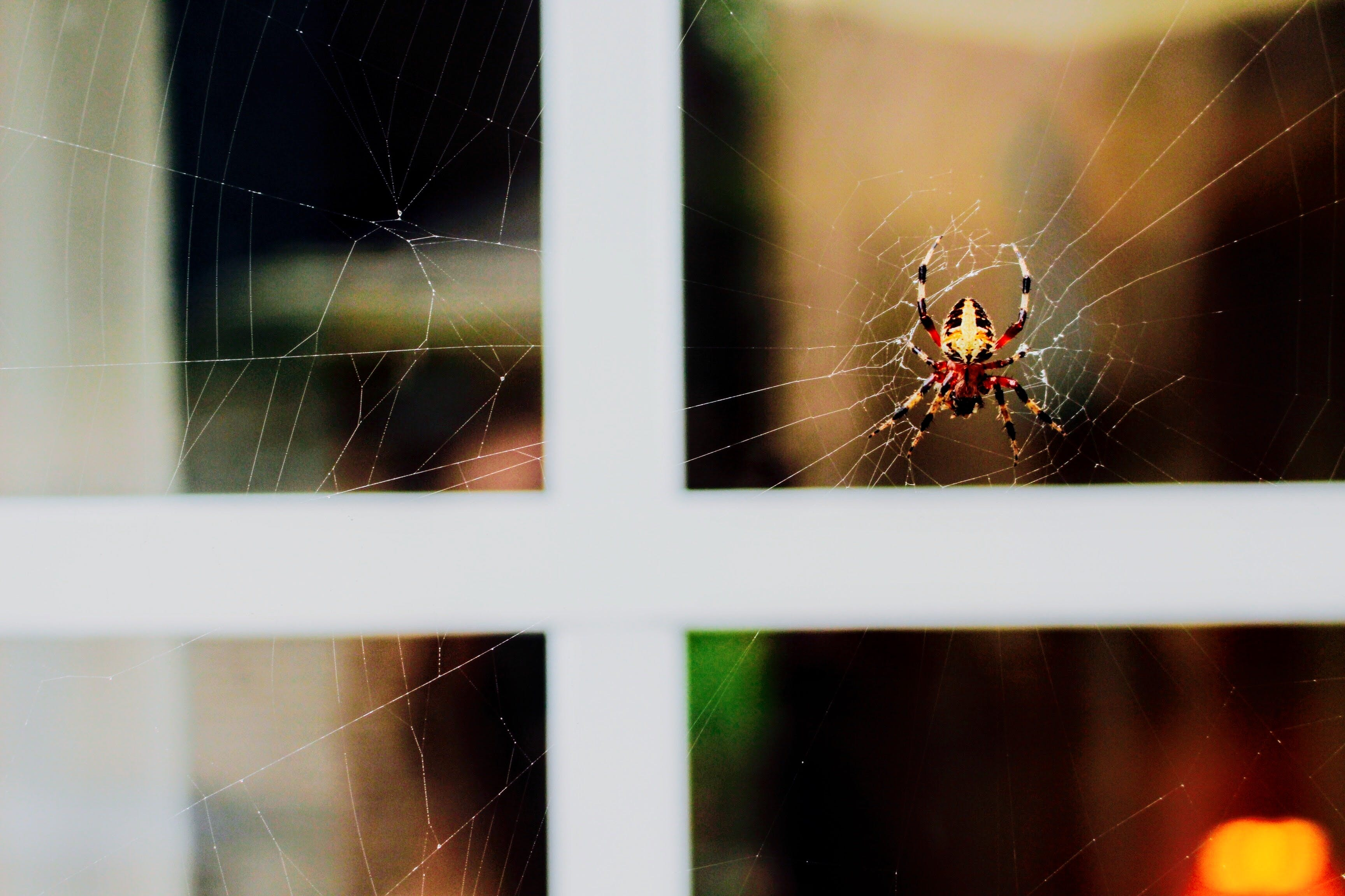 Black, Yellow, And Red Spider