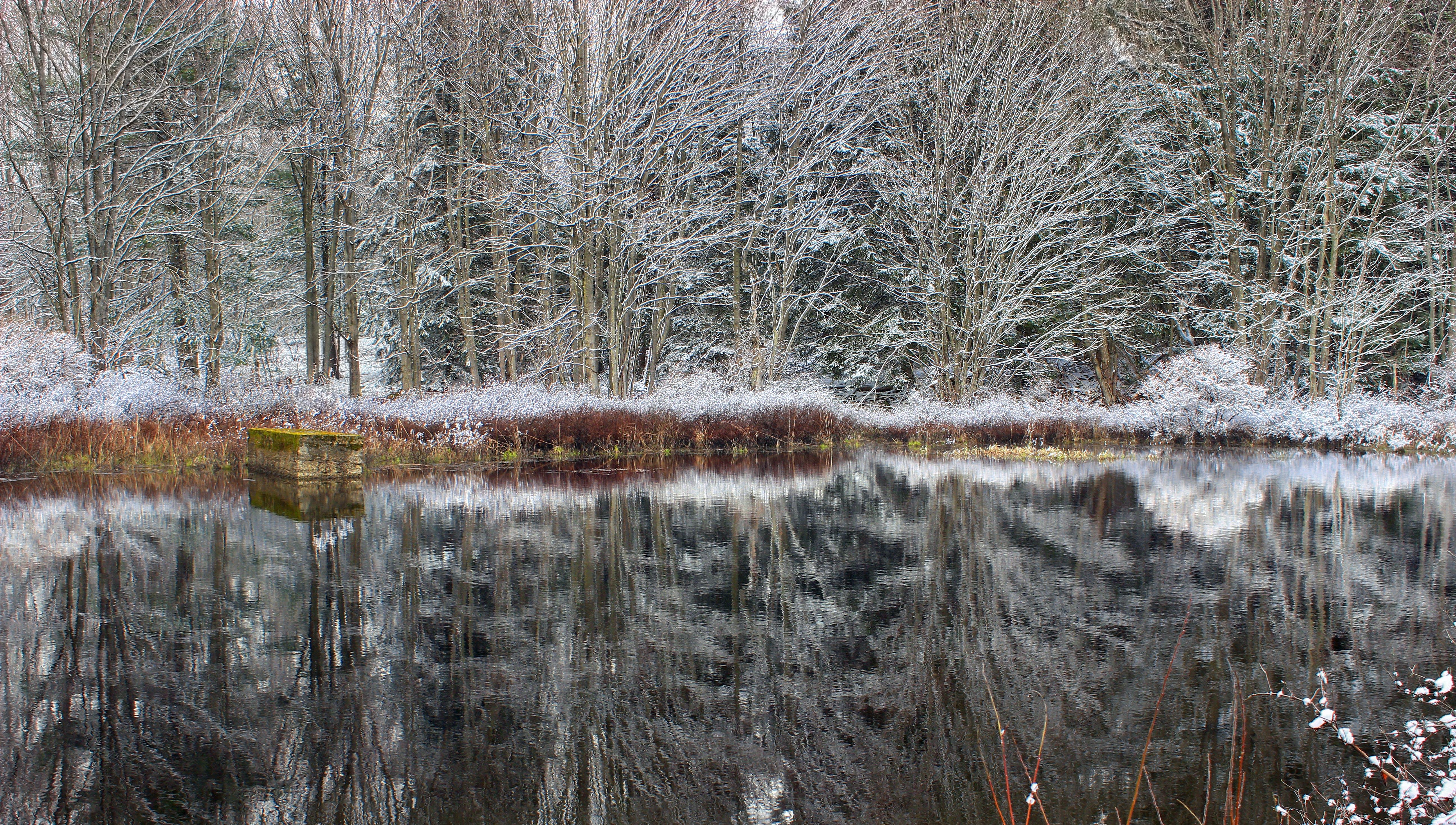 Gratis lagerfoto af dagtimer, forkølelse, frossen, frost