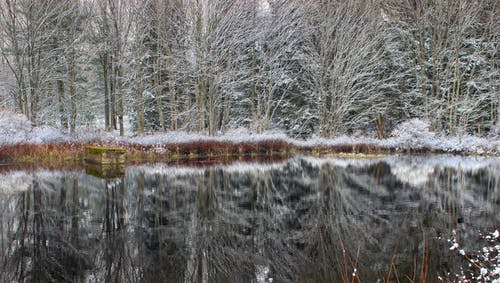 Body of Water Near Bare Trees during Daytime