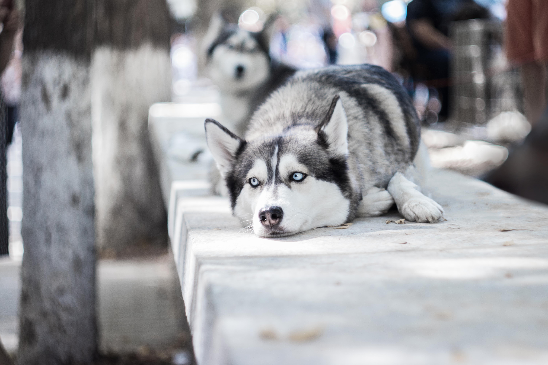 Free stock photo of #dog, dog, doggy, dogs