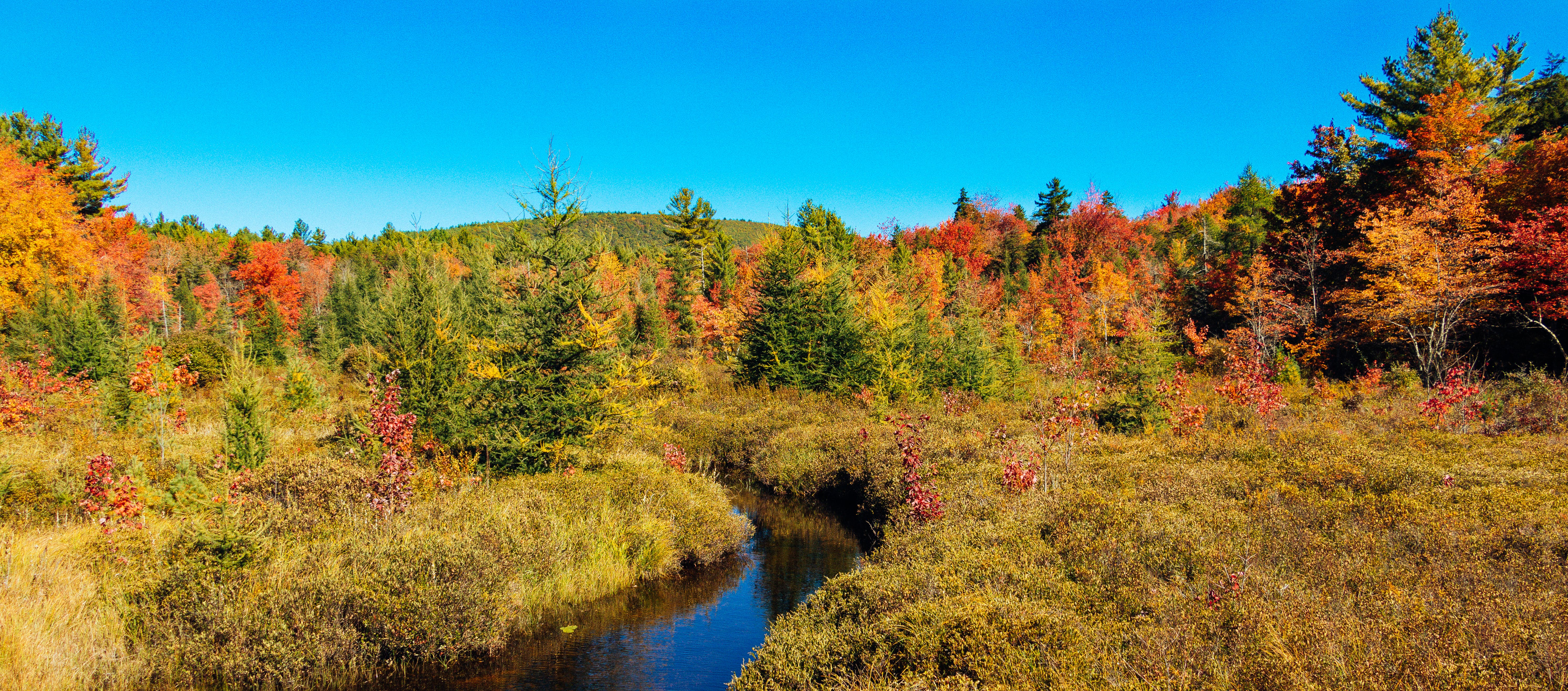 Free stock photo of autumn, colorful, colors, fall