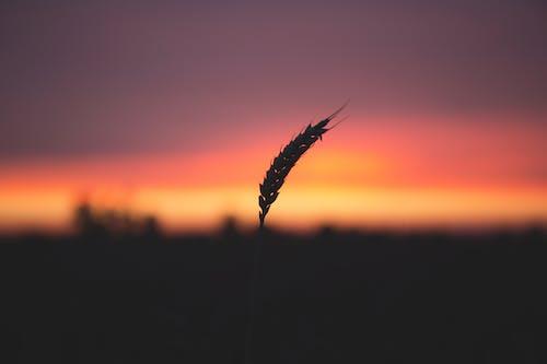 Gratis stockfoto met dageraad, fabriek, gras, macro