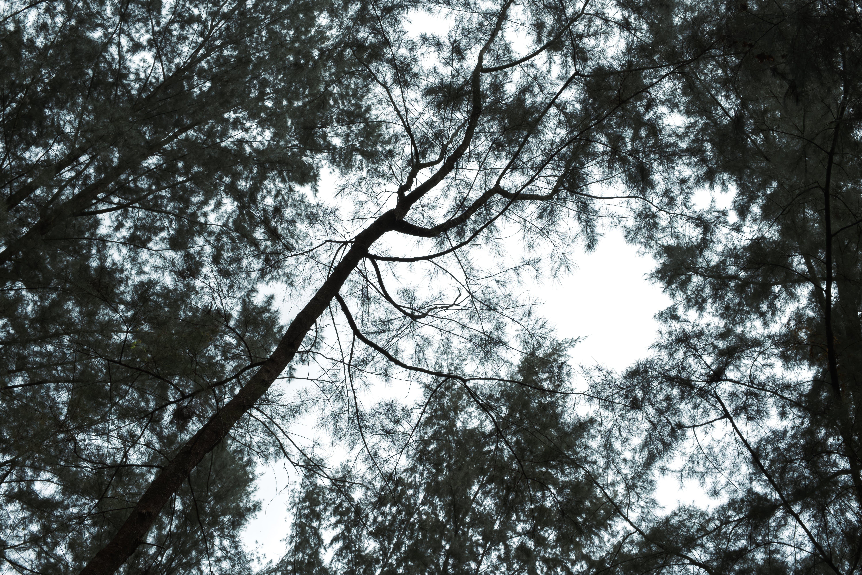 Free stock photo of #dark, #emo, #forest, #jungle