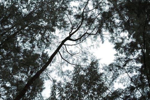 #emo, #moody, #叢林, #暗 的 免費圖庫相片