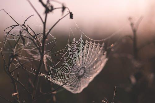 ağ, alan derinliği, cadılar bayramı, çiy damlaları içeren Ücretsiz stok fotoğraf