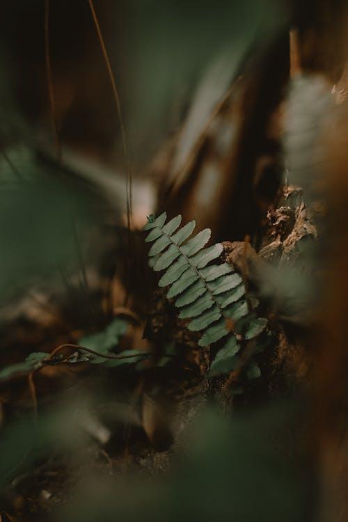 Бесплатное стоковое фото с дневной свет, завод, зеленый лист, легкий