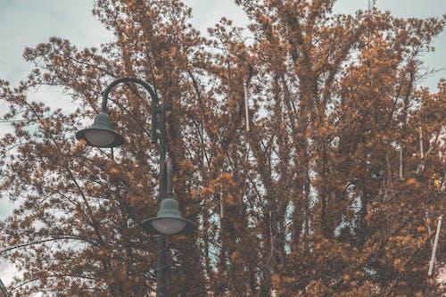 低角度拍攝, 光, 公園, 分支機構 的 免费素材照片