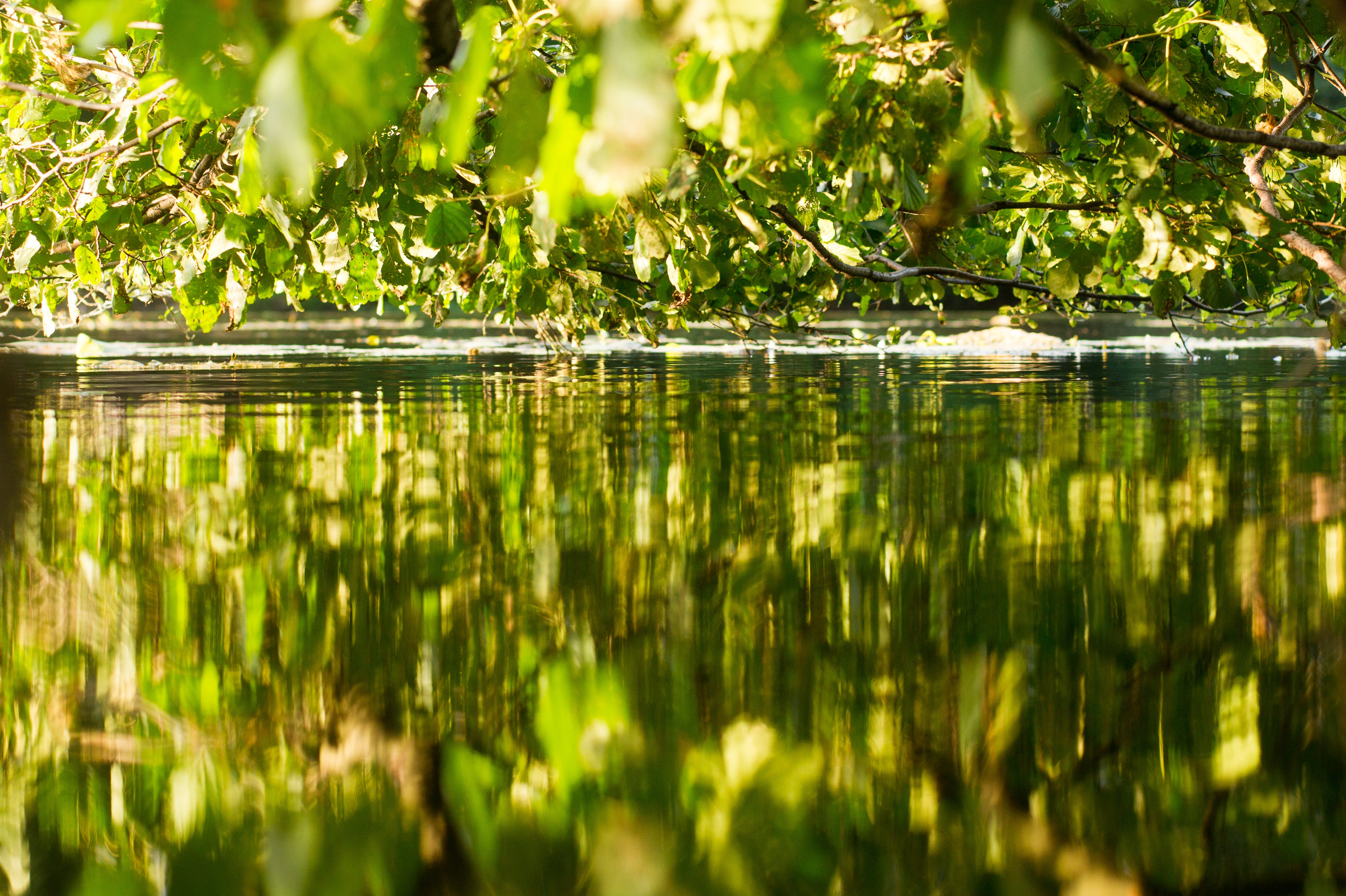 Free stock photo of foliage, green, Last Days of Summer, over the water