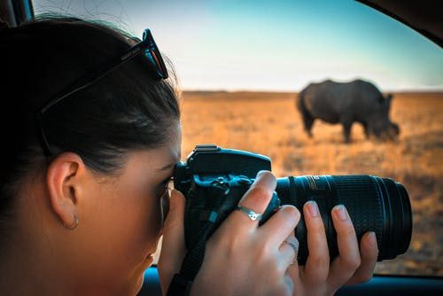 Základová fotografie zdarma na téma Afrika, denní světlo, dslr, fotoaparát