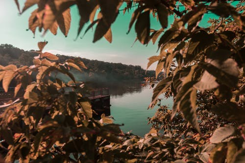 ağaçlar, akşam, çevre, doğa içeren Ücretsiz stok fotoğraf