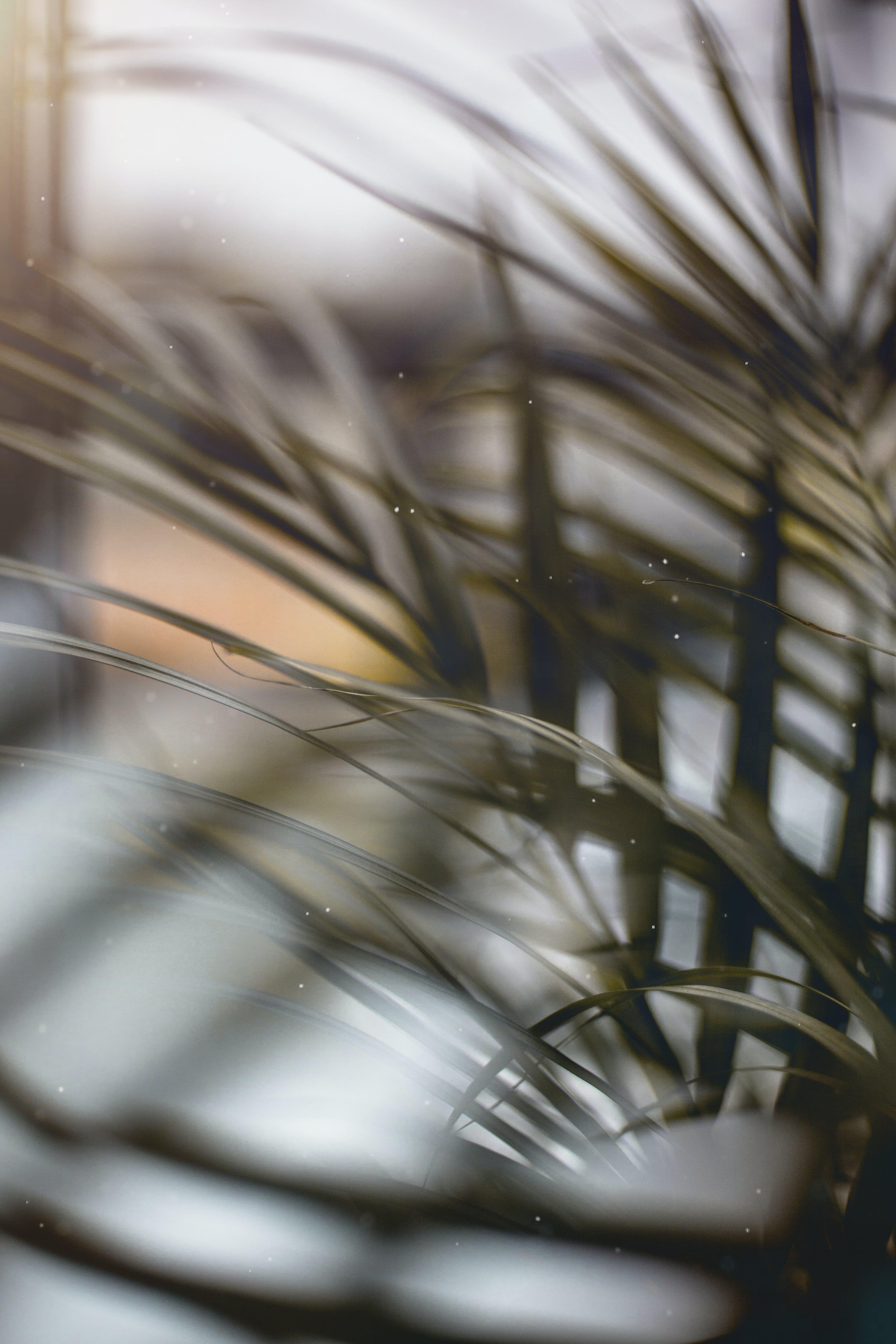 Základová fotografie zdarma na téma hrnková rostlina, jasný, lehký, odlesk objektivu