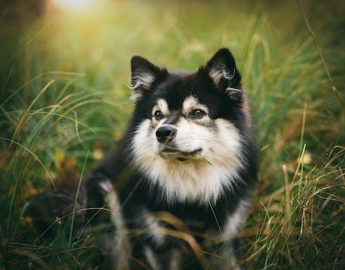 Foto profissional grátis de animal, animal de estimação, animal doméstico, bonitinho