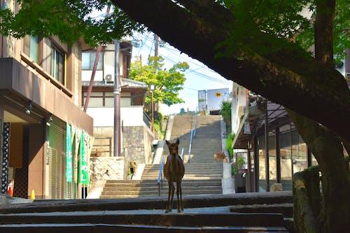 Fotos de stock gratuitas de árbol, ciervo, ciervos, Japón