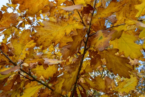 Δωρεάν στοκ φωτογραφιών με δασικός, δάσος το φθινόπωρο, ξύλο