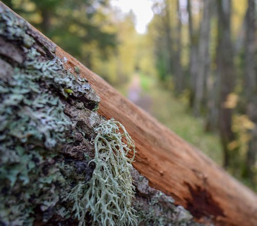 Free stock photo of autumn mood forest, forest, wood
