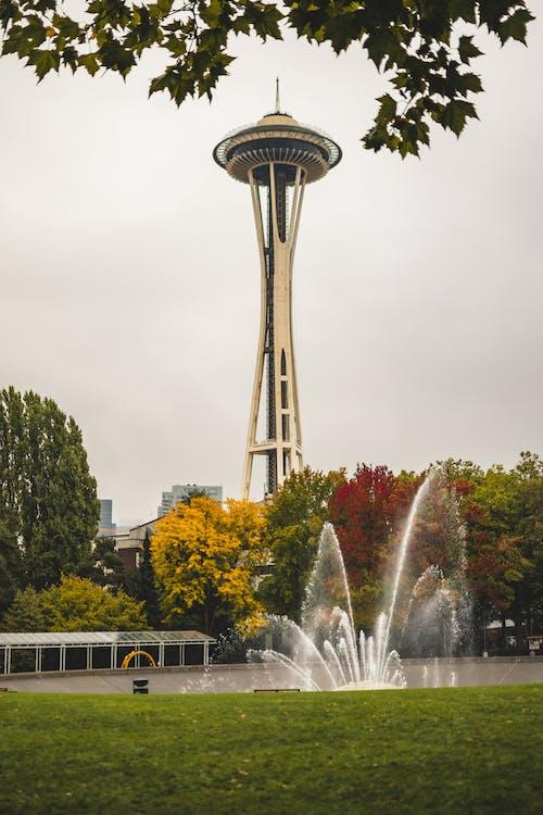 樹木, 秋天的顏色, 西雅图太空针