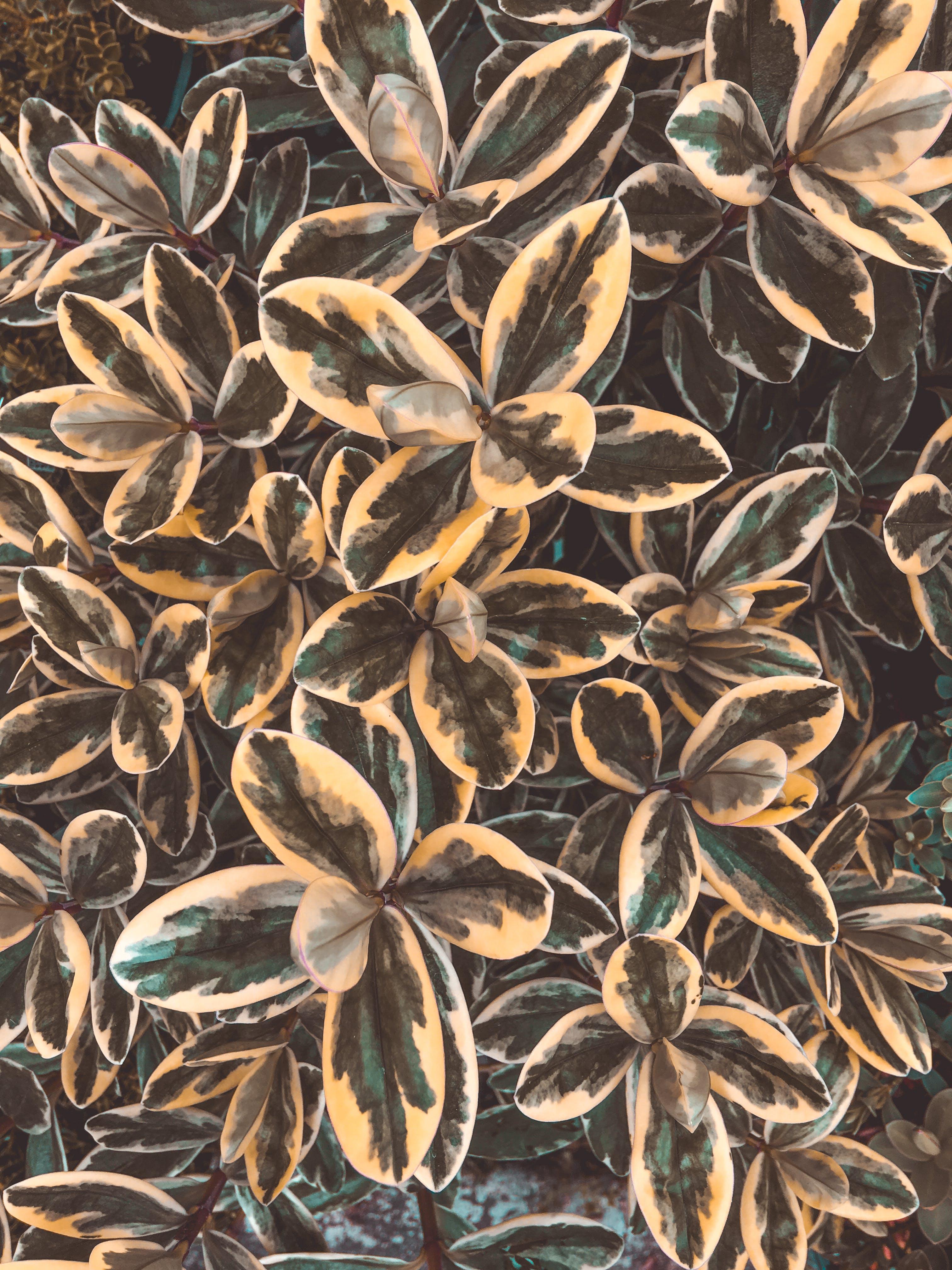 Free stock photo of biology, botany, golden yellow, pacific northwest