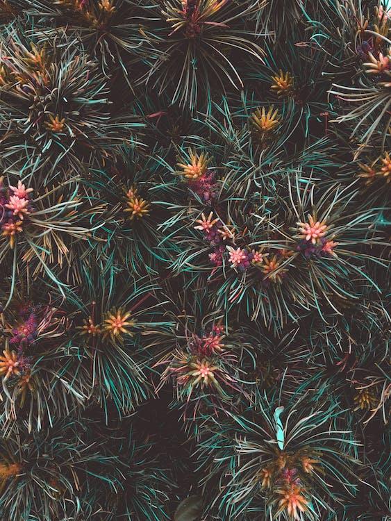 detailný záber, farba, kvet