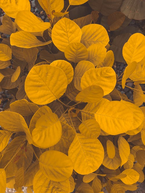 From above of colorful yellow round shaped leaves with lines on uneven surface in daylight