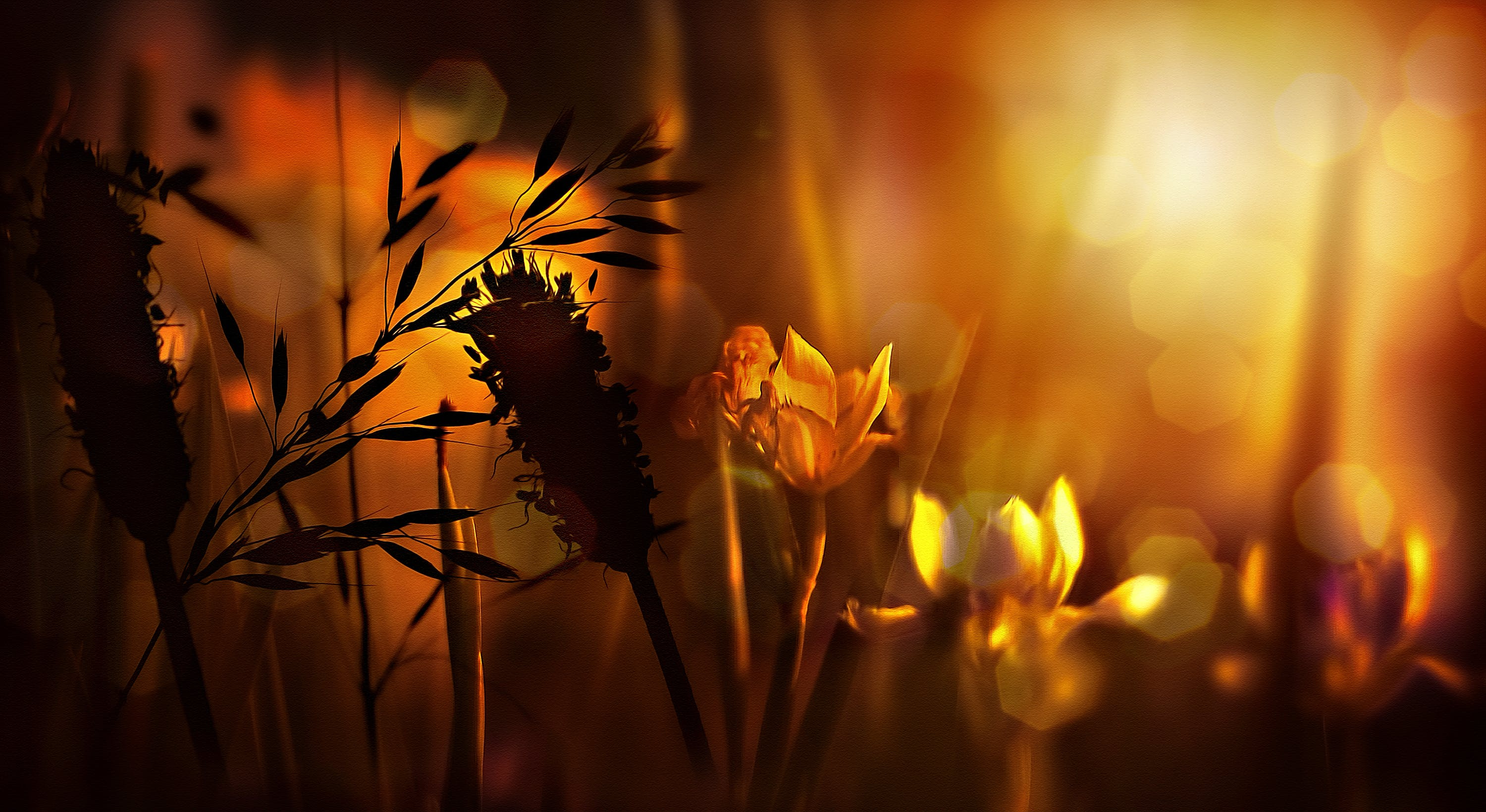 Bokeh Photography of Flowers