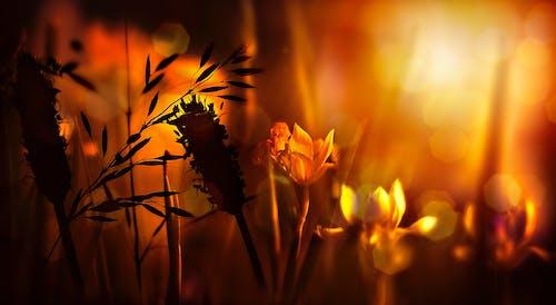 光, 光線, 夏天, 夏季 的 免費圖庫相片