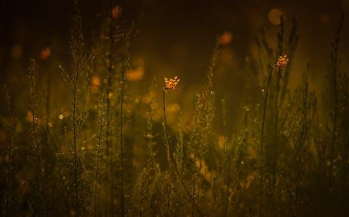 Foto d'estoc gratuïta de a l'aire lliure, ales, animals, camp