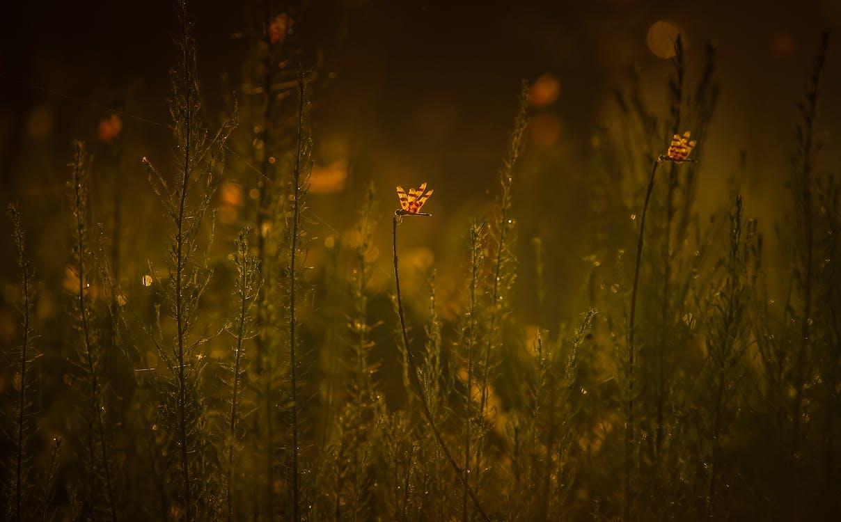 barvy, flóra, hmyz