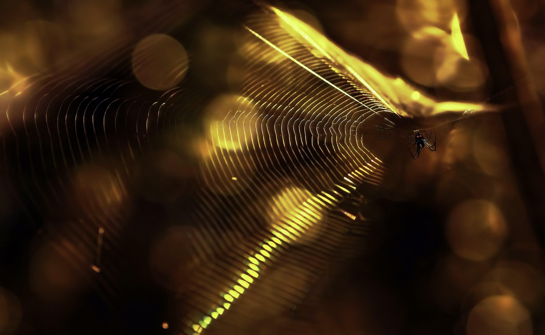 Kostnadsfri bild av artropod, firande, fokus, insekt