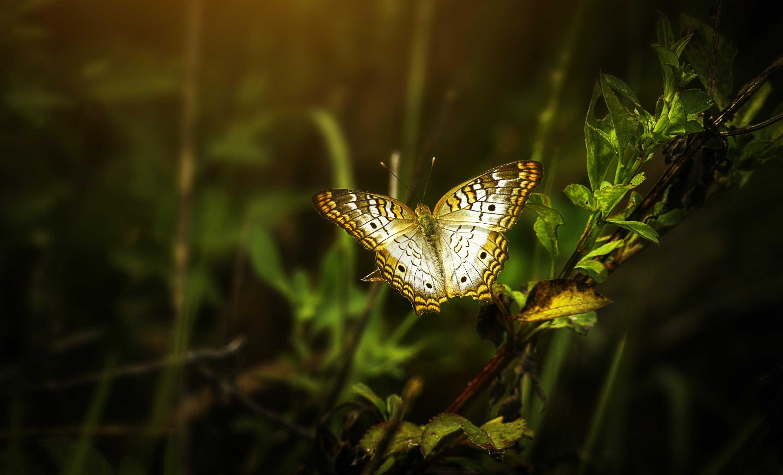 Ilmainen kuvapankkikuva tunnisteilla eläin, eläinkuvaus, hyönteinen, kaunis