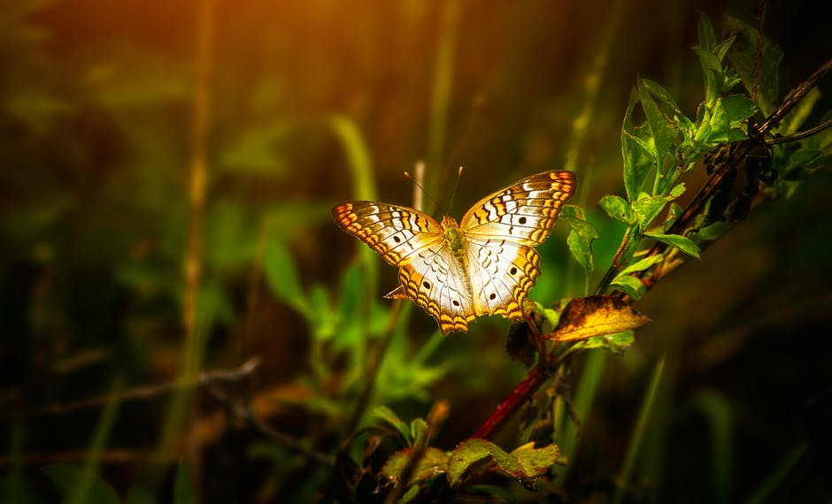 Close up photo of butterfly perched on leaf