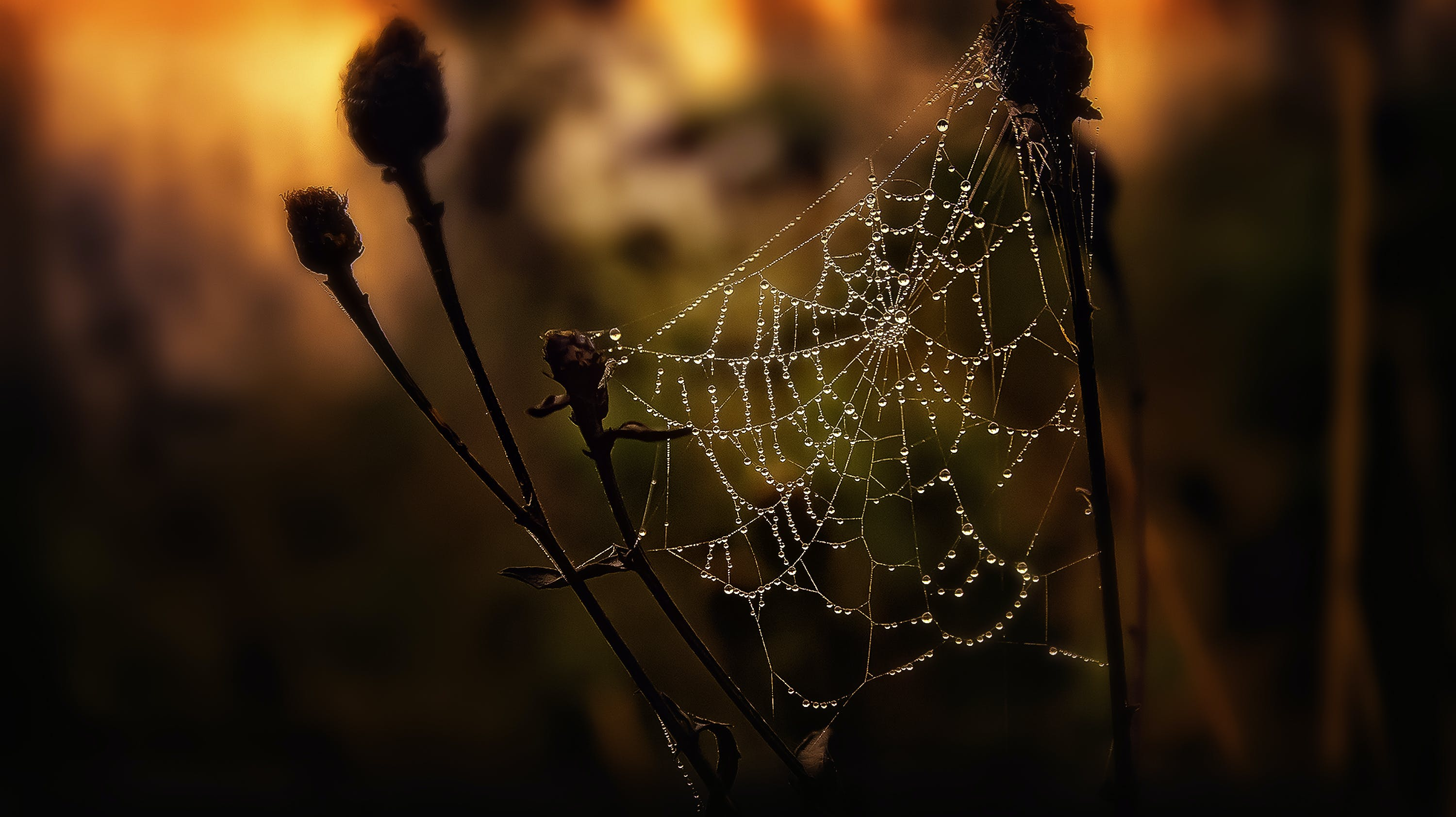 Selective Focus Photography of Spider Web