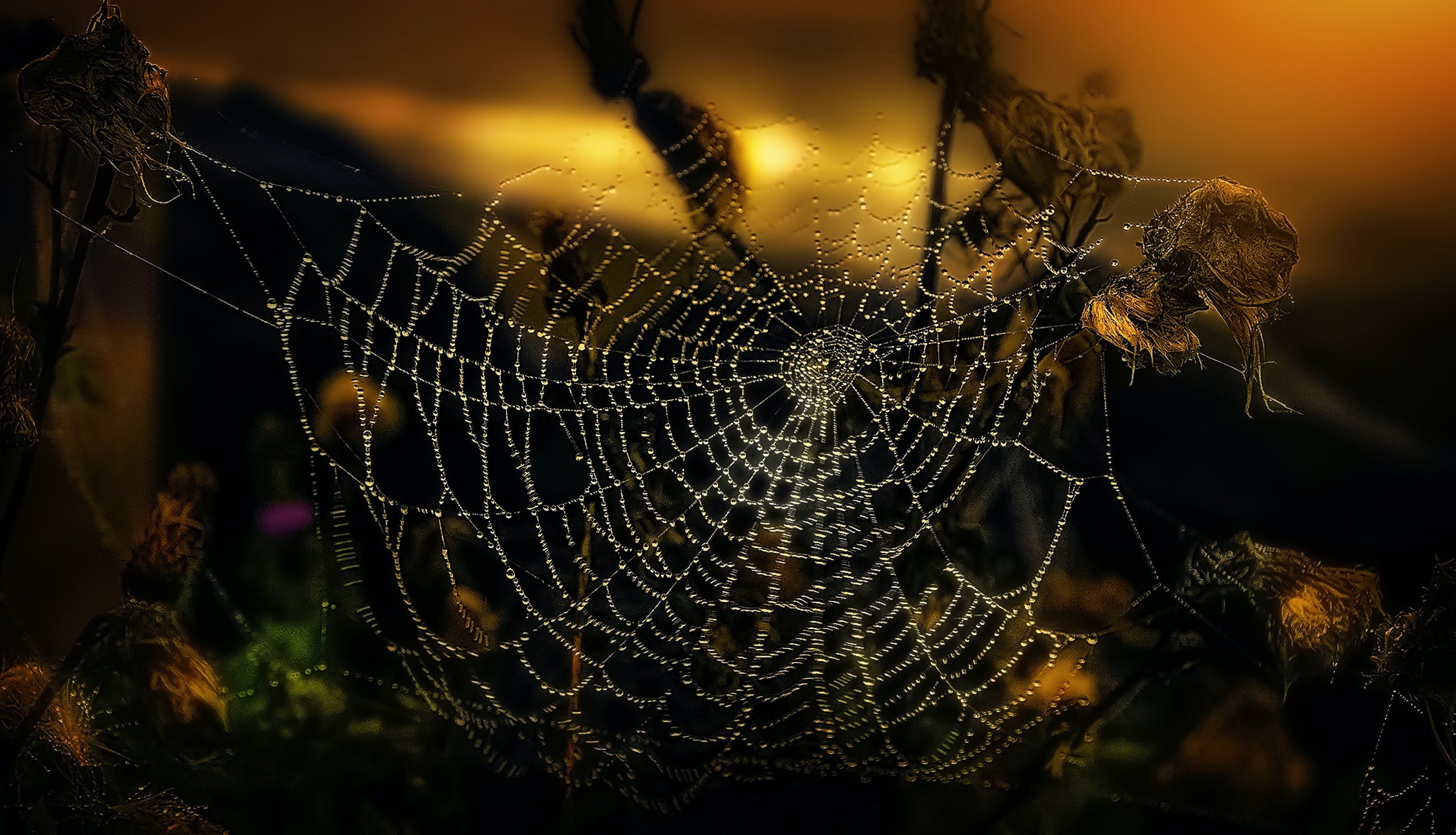 Spiderweb in Shallow Focus Photography