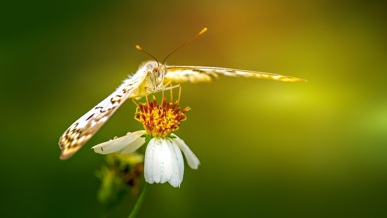 Gratis lagerfoto af bestøvning, blomst, blomstrende, close-up