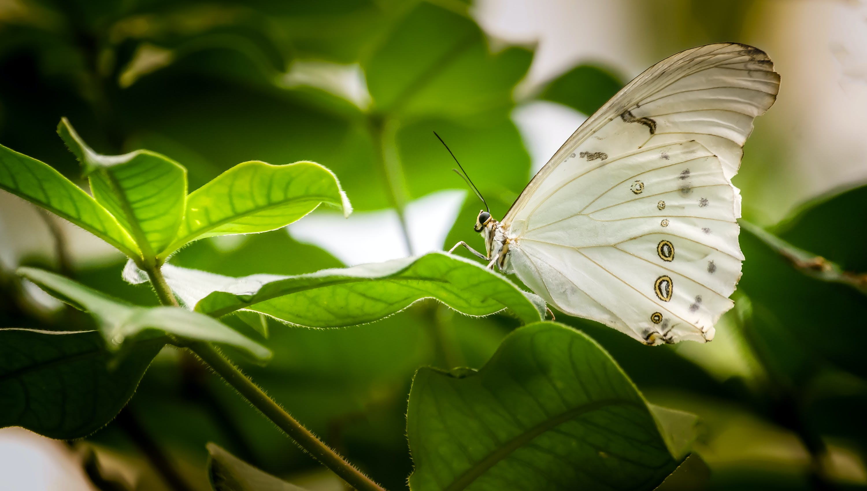 White Butterfly Perched on Green Leaf