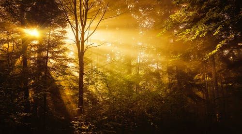 Бесплатное стоковое фото с дерево, деревья, живописный, закат
