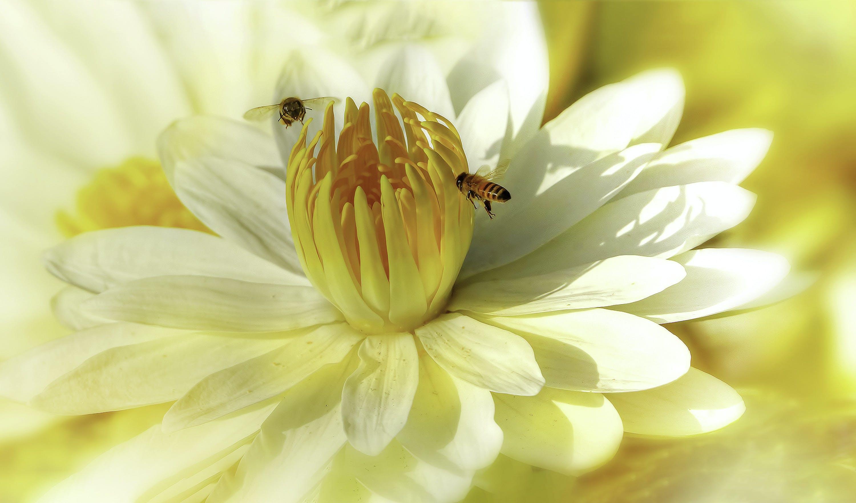 Kostnadsfri bild av bin, blomma, blomning, botanisk