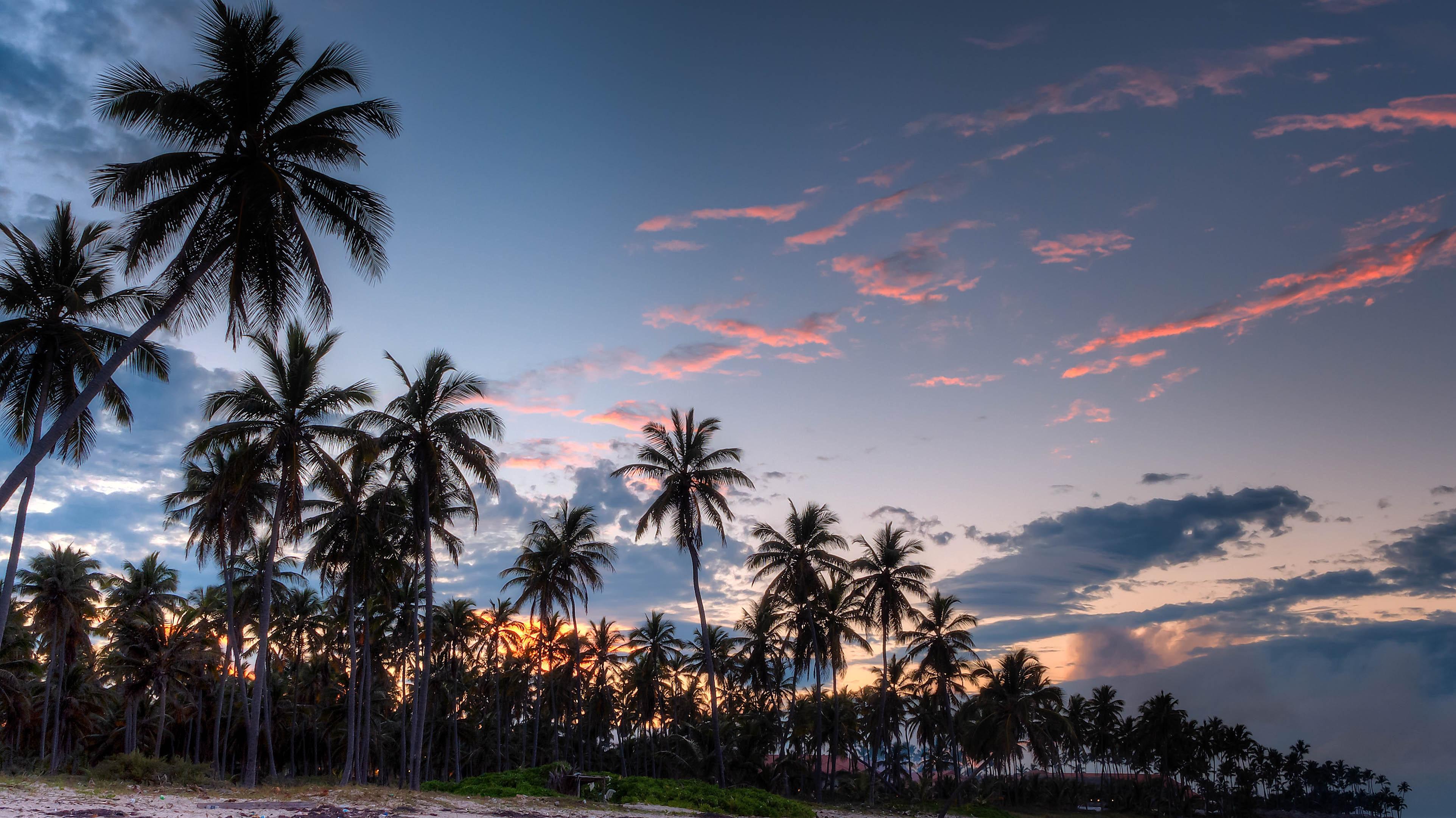 Coconut Palm Tress Beside Calm Lake Silhouette 183 Free
