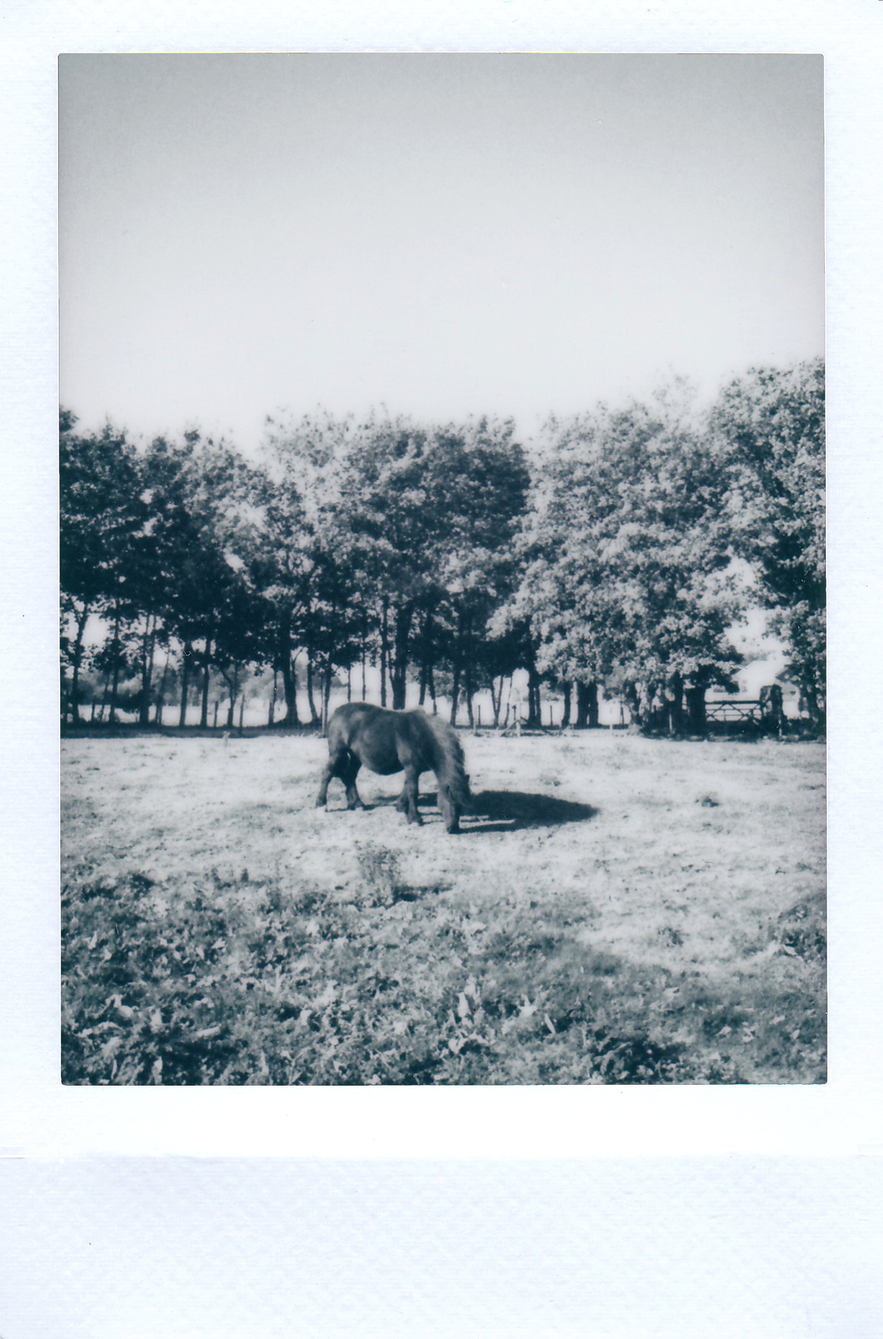 Photograph of Horse on a Field