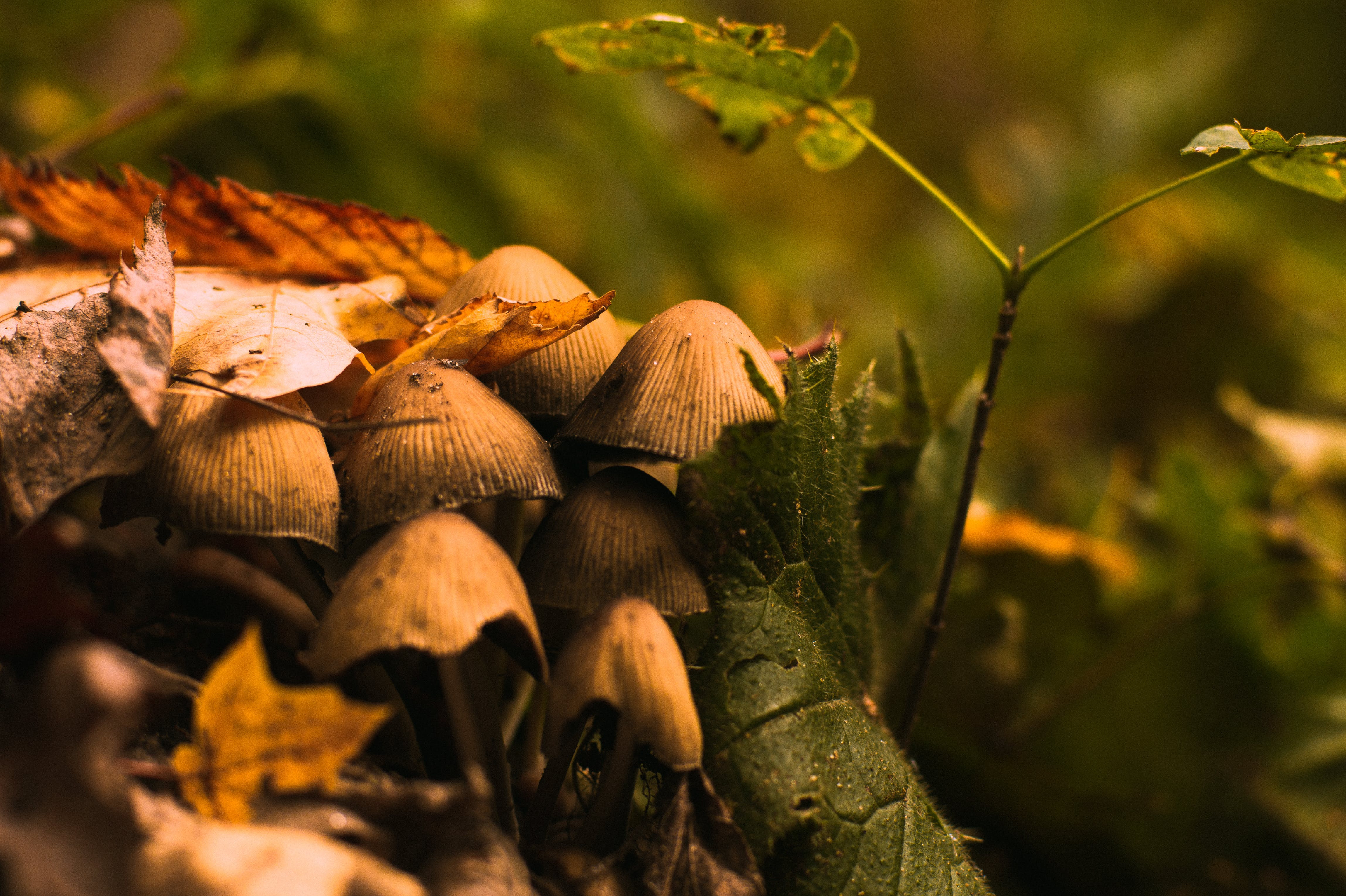 Free stock photo of autumn, foliage, forest, forest mushroom