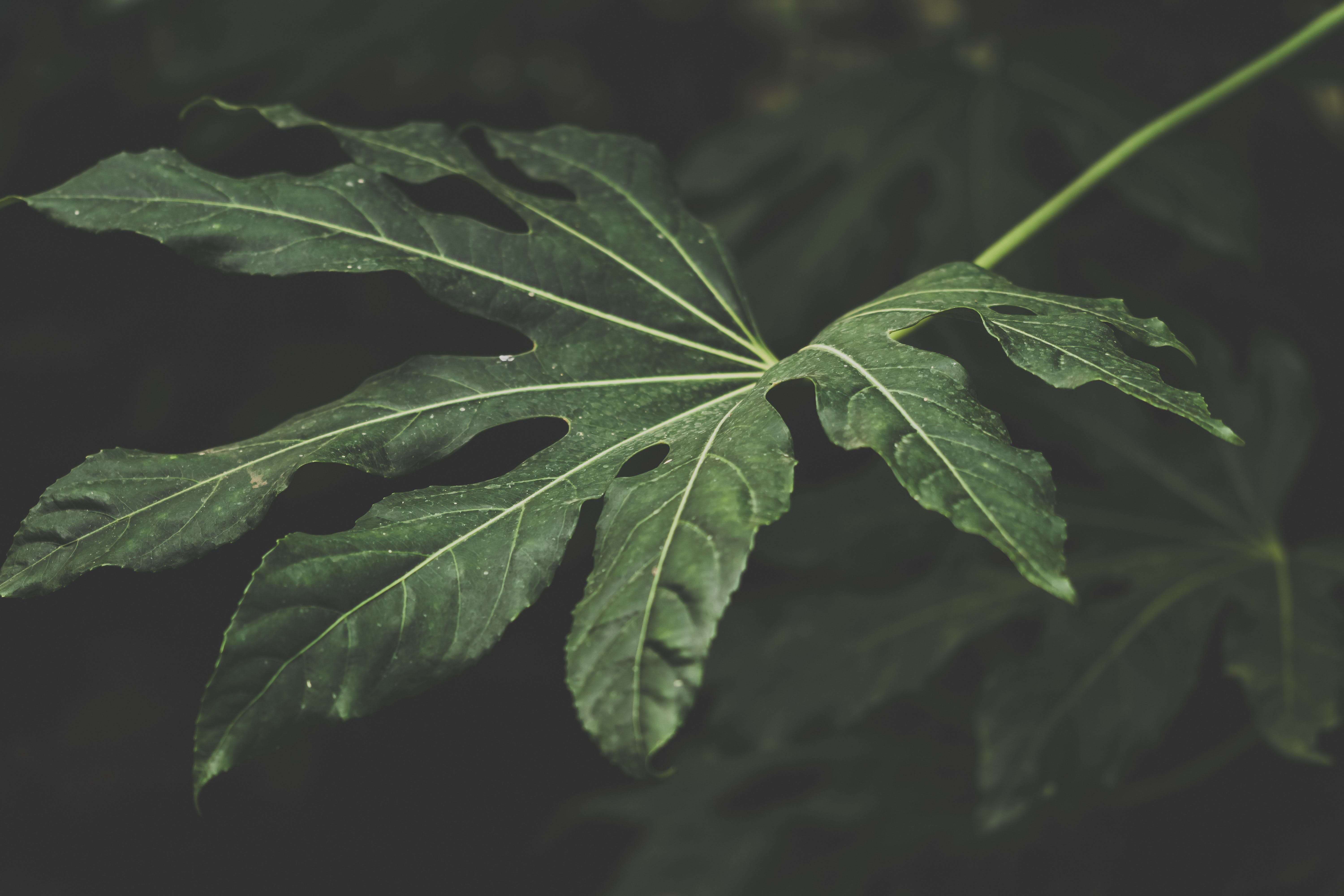 Focus Photography of Green Leafed Plant