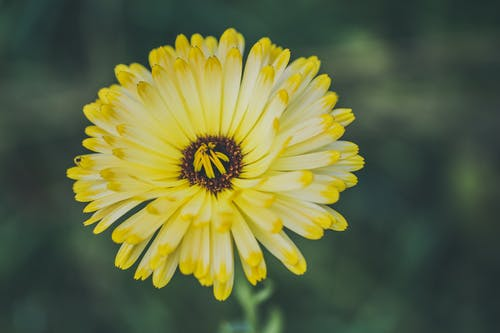 Free stock photo of flower, mother nature, nature, outdoor