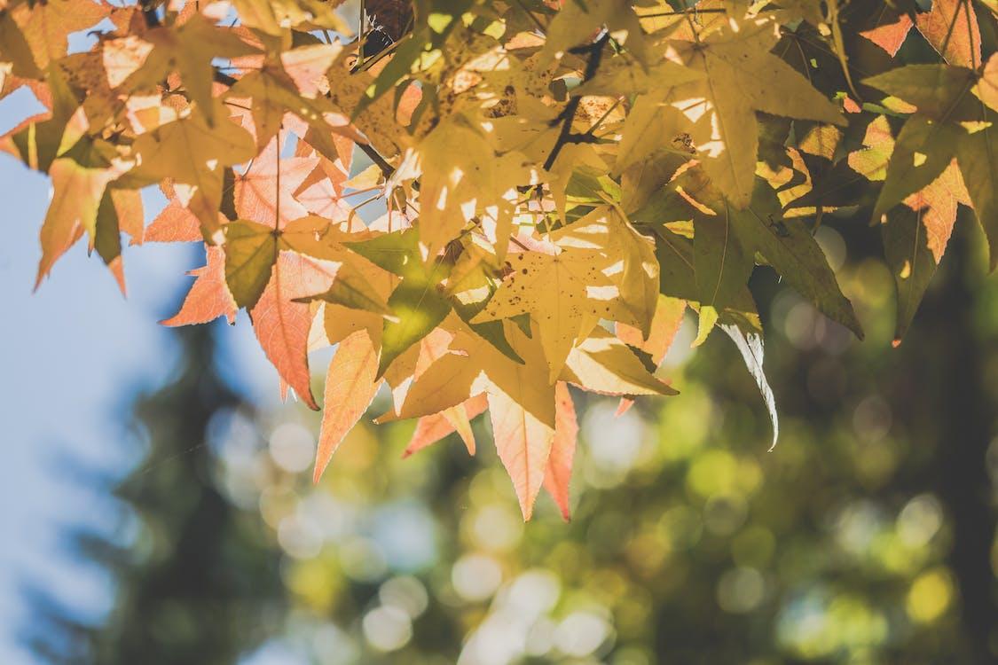 δασικός, δάσος, δάσος το φθινόπωρο