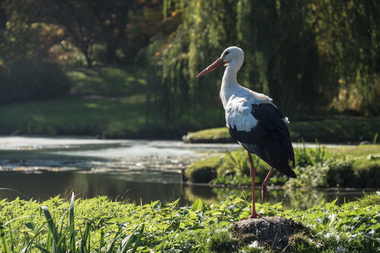 Free stock photo of bird, animal, birds, outdoor