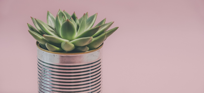 Бесплатное стоковое фото с ботаника, жестяная банка, завод, кактус