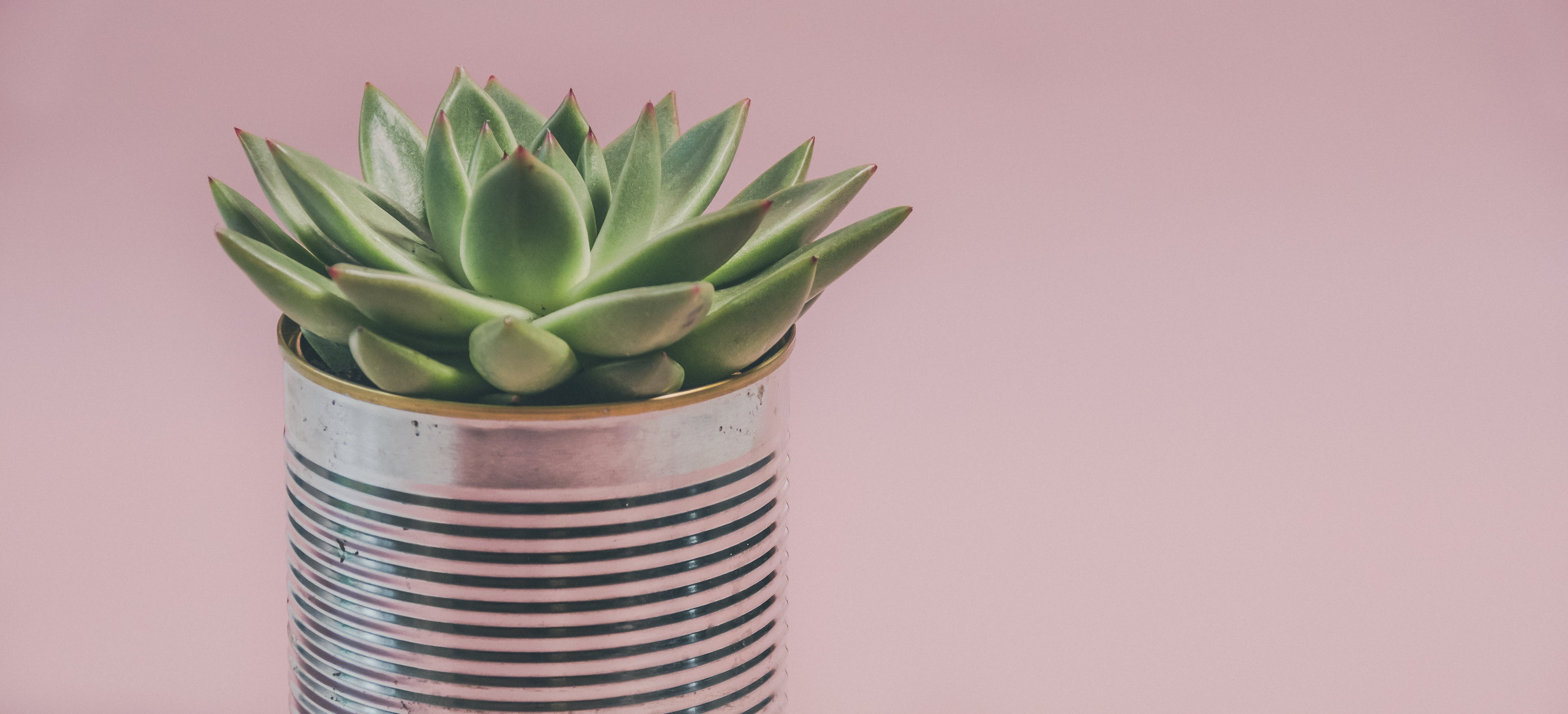 Green Succulent Plant on Can