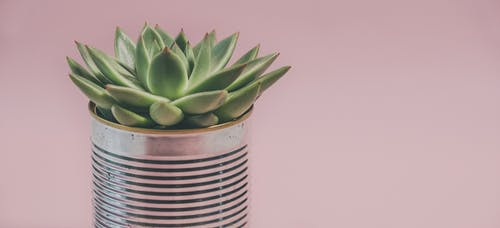 Kostenloses Stock Foto zu botanik, büchse, dose, flora
