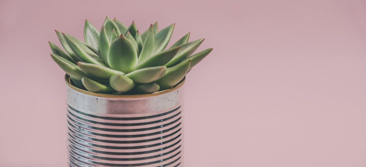 Foto Einer Saftigen Pflanze
