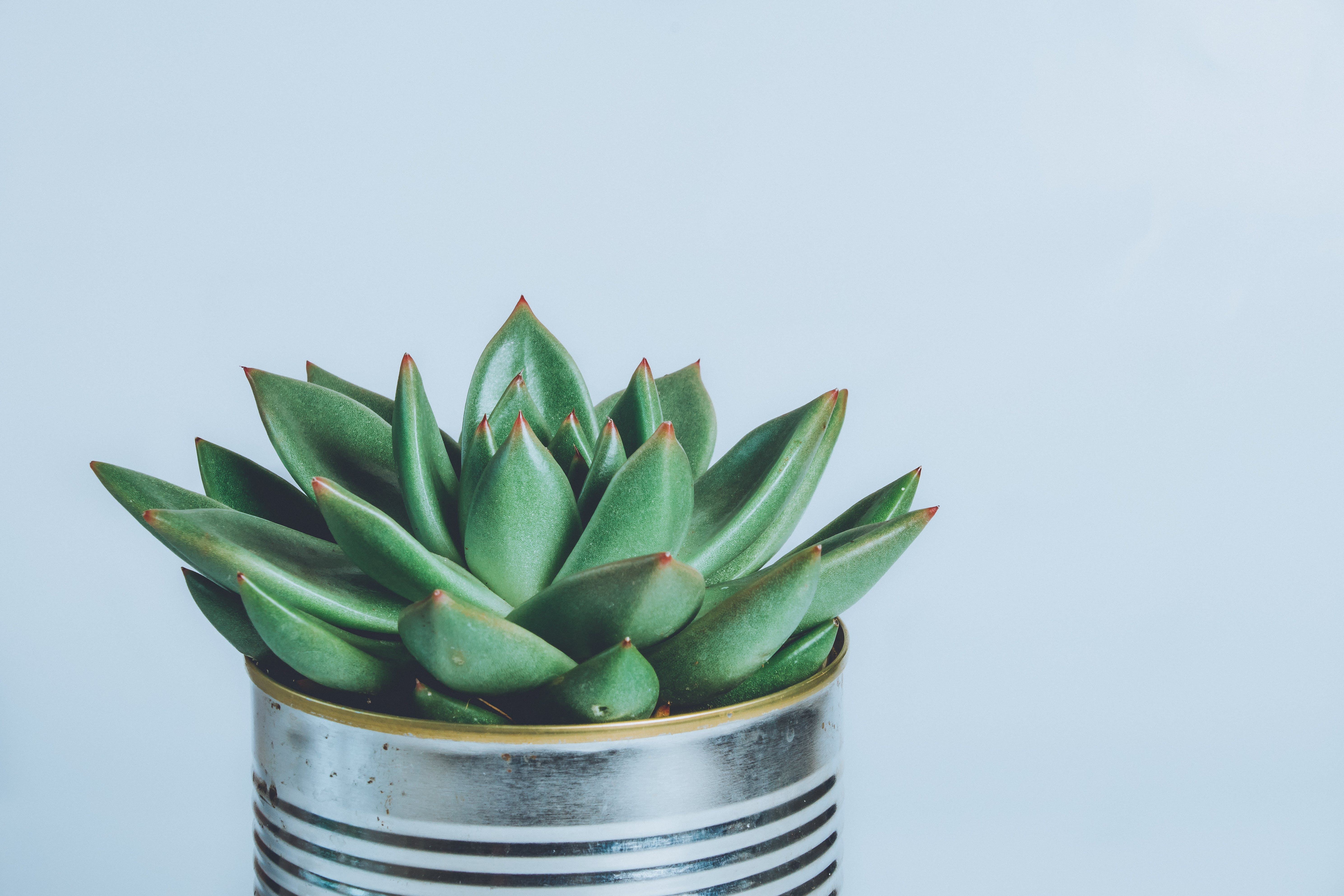 Green Succulent Plant on Gray Metal Can