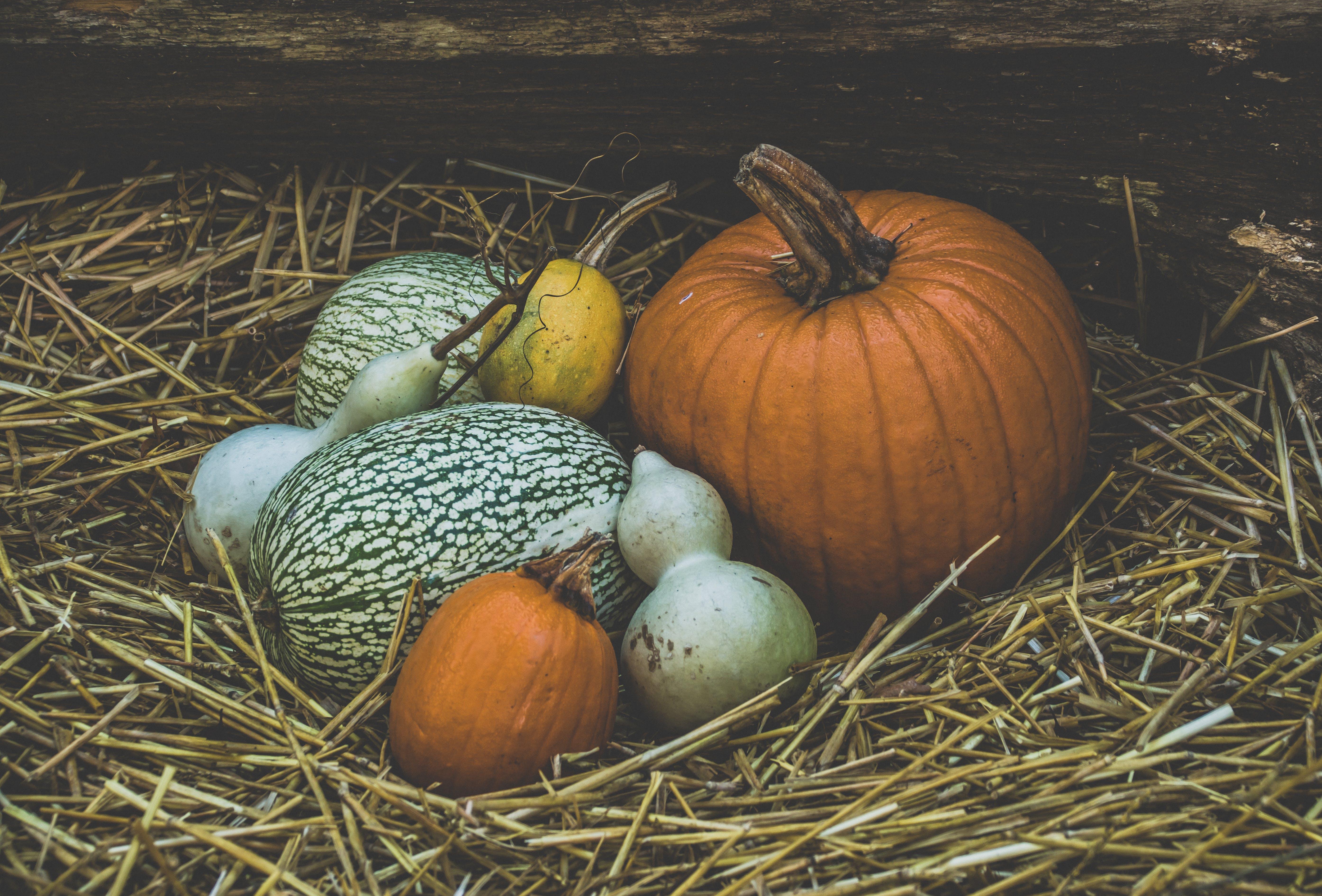 Free stock photo of autumn, autumn decoration, background, background image