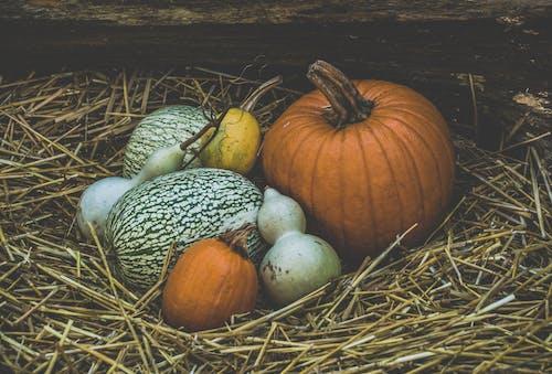 Free stock photo of autumn decoration, background, background image, halloween